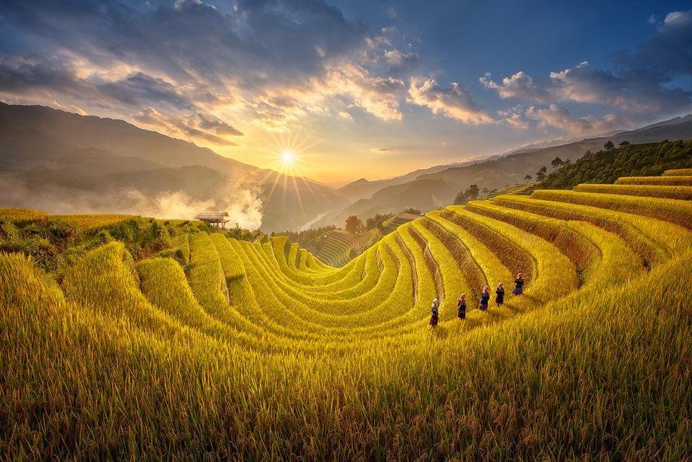 Những thửa ruộng bậc thang, thung lũng dưới chân đèo được phủ lên một tấm áo màu vàng khi mùa lúa chín