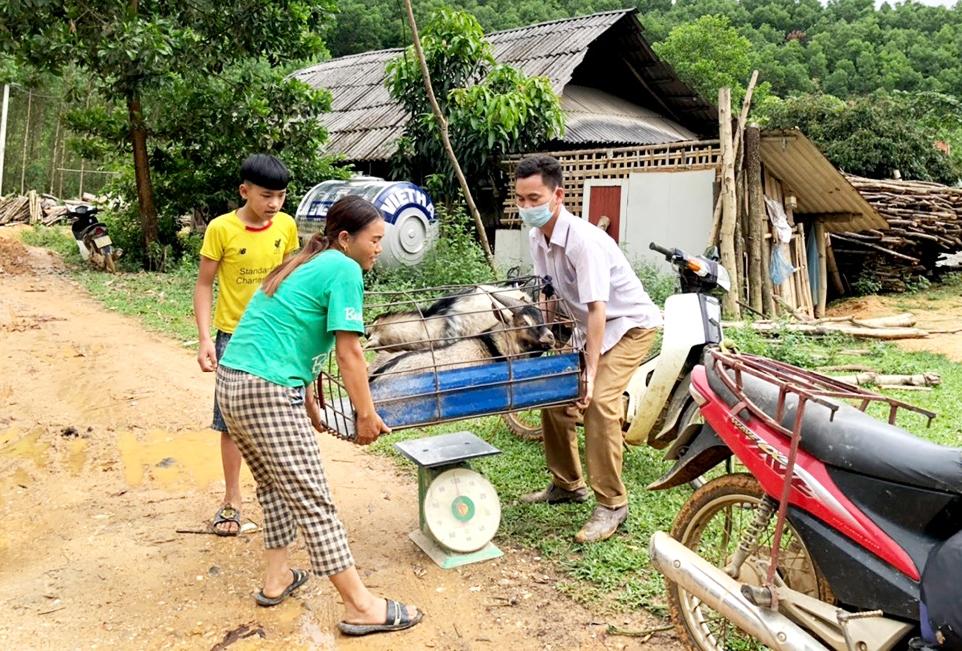 Chị Sinh Thị Ỉn vừa bán được 2 con dê, thu về gần 7 triệu đồng để tăng thêm thu nhập