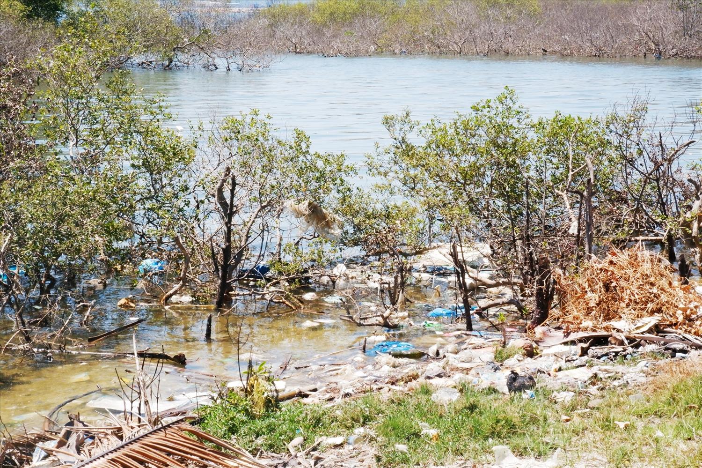 Tam Giang hiện có đến 5 ha rừng chết. (Ảnh: X.H)