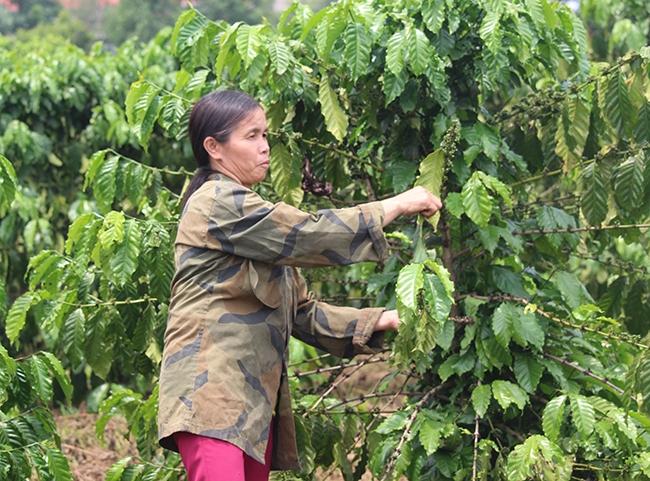 Ở thôn Đắk Mế, chị Khiêm là tấm gương phát triển kinh tế điển hình để người dân noi theo