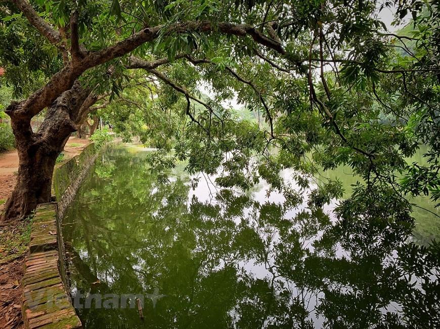 Hàng cây ăn trái cổ thụ được trồng ven hồ tạo dáng và vẻ nên thơ cho quần thể di tích núi Hoàng Xá. (Ảnh: Xuân Mai/Vietnam+)
