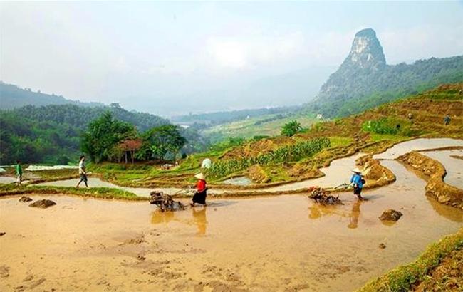 Người dân xã Quý Hòa lao động sản xuất trên những thửa ruộng bậc thang ở Ðồi Thung