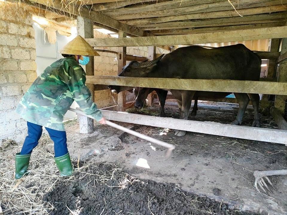 Chị Thắm đang dọn dẹp vệ sinh chuồng trại chăn nuôi của một hộ dân đang đi cách ly