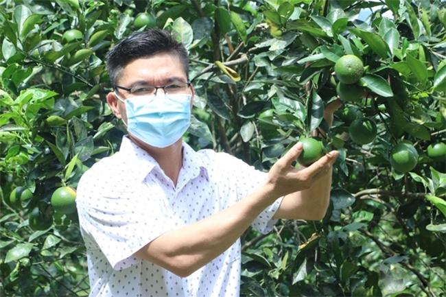 Trang trại của anh Hào hiện có diện tích rộng gần 5ha, chủ yếu trồng cam và chanh, mỗi năm cho thu nhập 600 - 700 triệu đồng