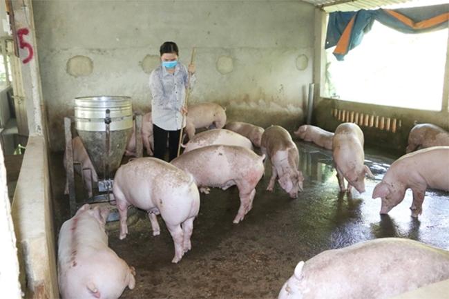 Từ nguồn Quỹ Hỗ trợ nông dân của Trung ương hội và Tỉnh hội ủy thác, Hội Nông dân huyện đã tín chấp cho gần 200 hộ nông dân vay với nguồn vốn gần 2,4 tỷ đồng