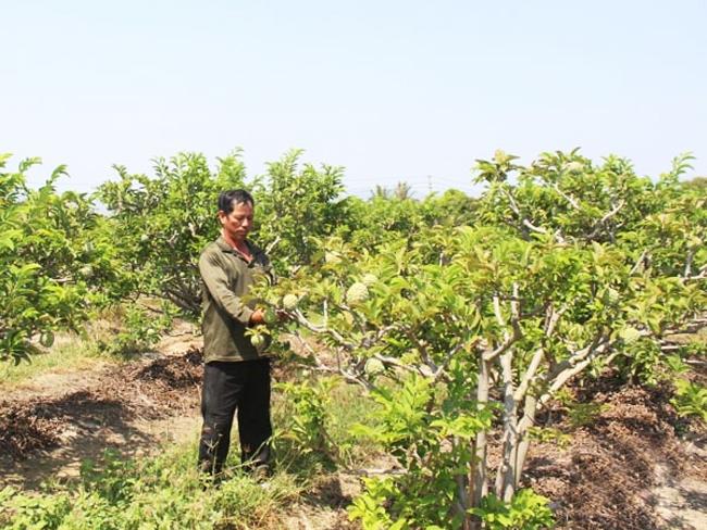 Anh Nguyễn Văn Quý, thôn Nhị Hà 1, đầu tư phát triển cây ăn quả cho thu nhập cao