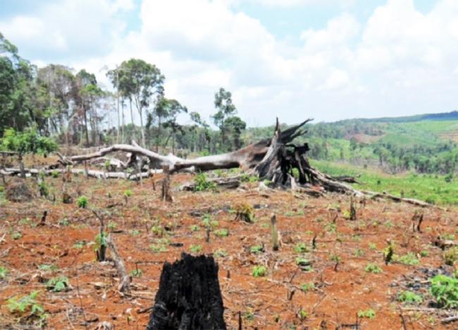 Hàng trăm hécta rừng bị phá tại Đắk Lắk mỗi năm