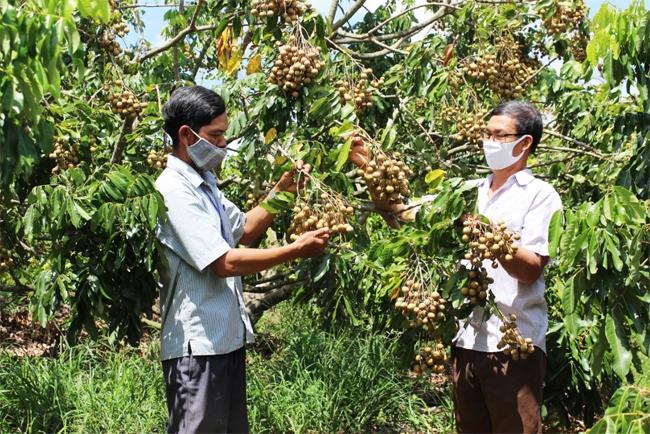 Trồng và mở rộng diện tích cây ăn quả là hướng thoát nghèo của người dân xã Yang Trung