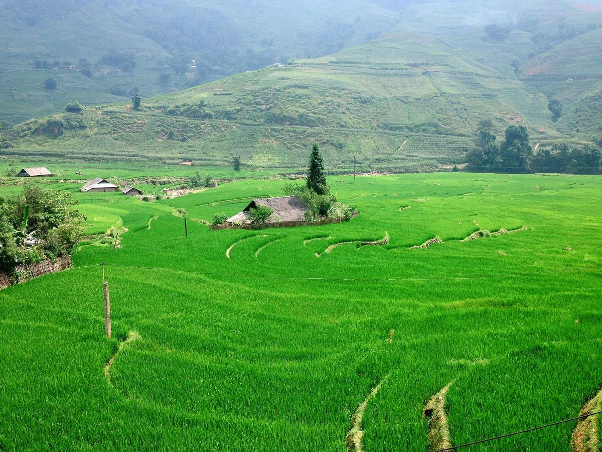 Bản Tả Van là một trong những điểm ngắm lúa đẹp và thuận tiện ở Sa Pa