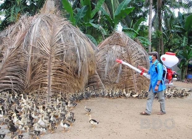 Phun thuốc khử trùng sau mưa bão để phòng, chống dịch bệnh cho vật nuôi. Ảnh minh họa