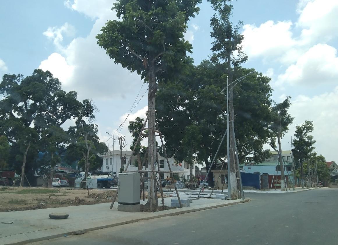 Hai tòa nhà điều hành (phía sau hàng cây) của Dự án đã được hoàn thiện mặc dù chưa có giấy phép xây dựng