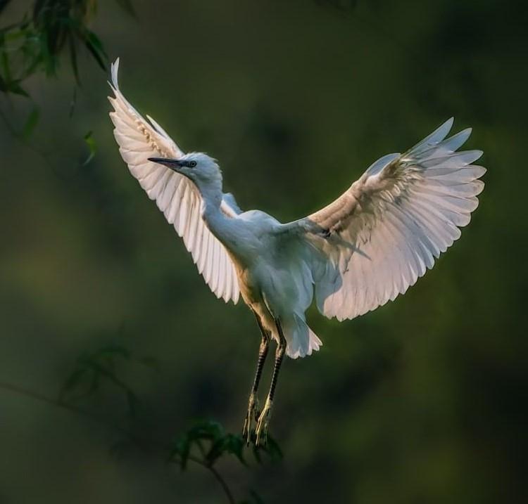 Một loài chim quý ở Thung Nham