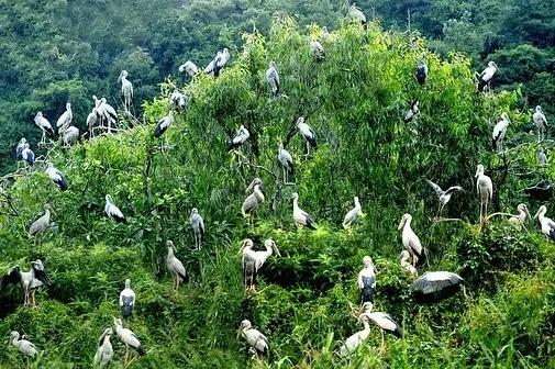 Thung Nham còn được gọi là thung chim