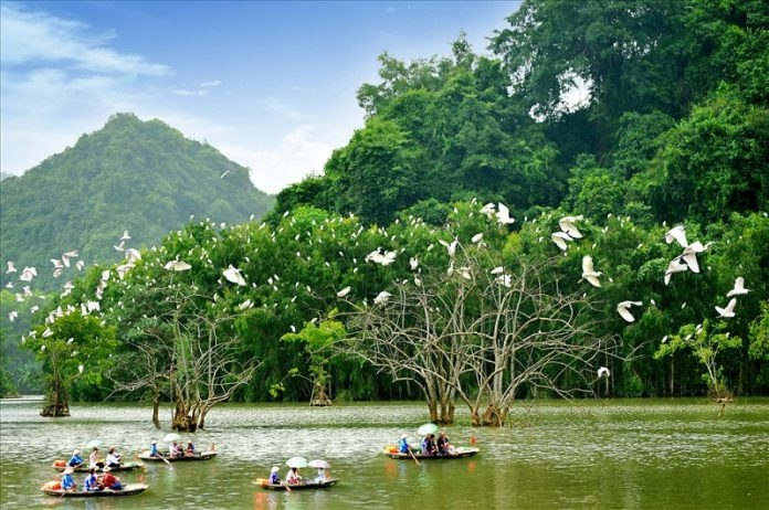 Du khách có thể du ngoạn trên thuyền để ngắm từng đàn cò trắng bay đi kiếm ăn và bay về tổ