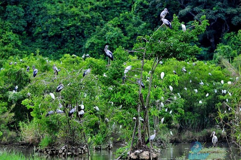Khám phá Thung Nham- xứ sở của các loài chim 5
