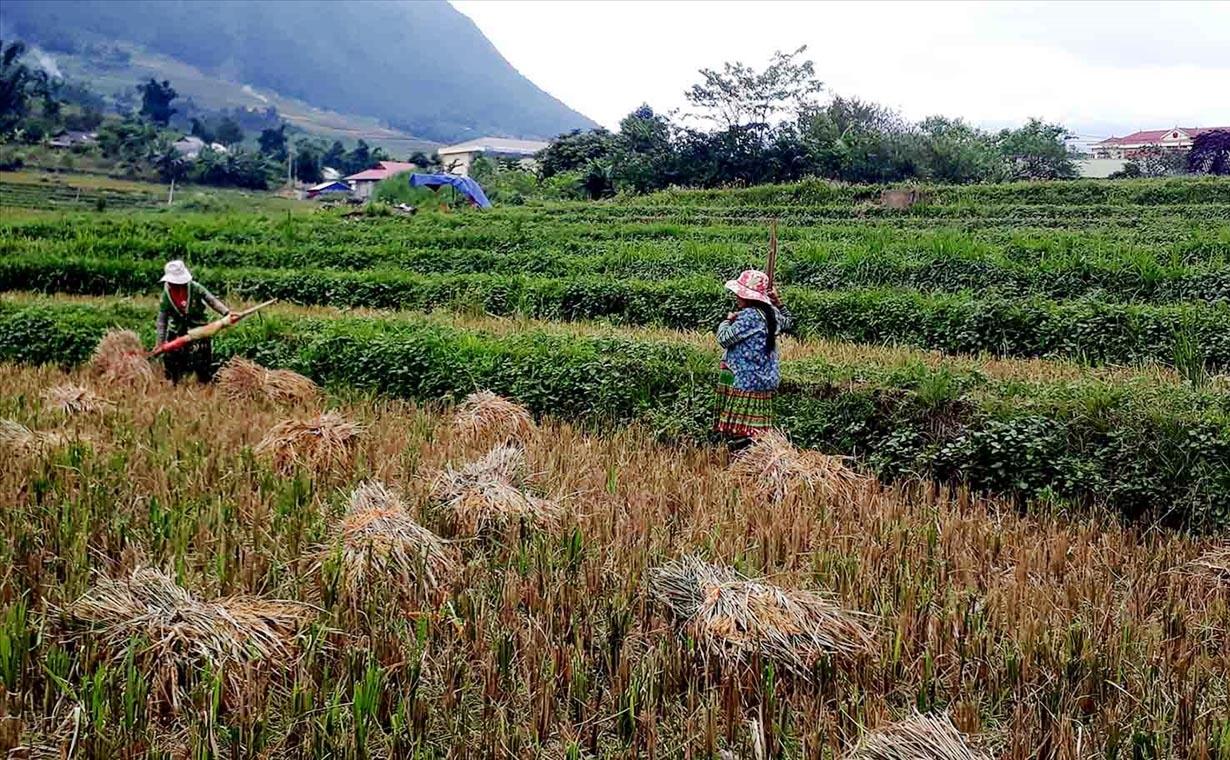 Mục tiêu bảo đảm an ninh lương thực được cụ thể hóa trong các chính sách đầu tư, hỗ trợ phát triển kinh tế - xã hội vùng đồng bào DTTS.