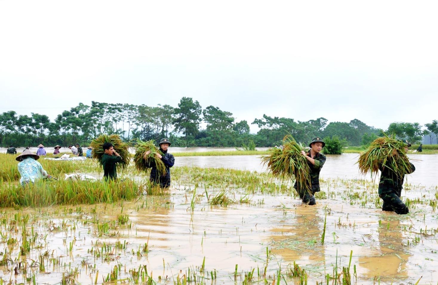 Thiên tai khiến tài nguyên sản xuất nông nghiệp bị thu hẹp. (Ảnh minh họa)