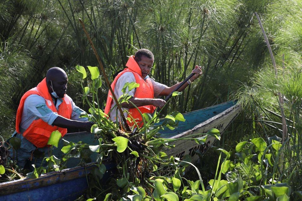 Ông Dominic Kahumbu cùng một công nhân đi thu hoạch bèo tây trên hồ Vitoria để chuyển đổi thành khí sinh học. (Ảnh: Reuters).