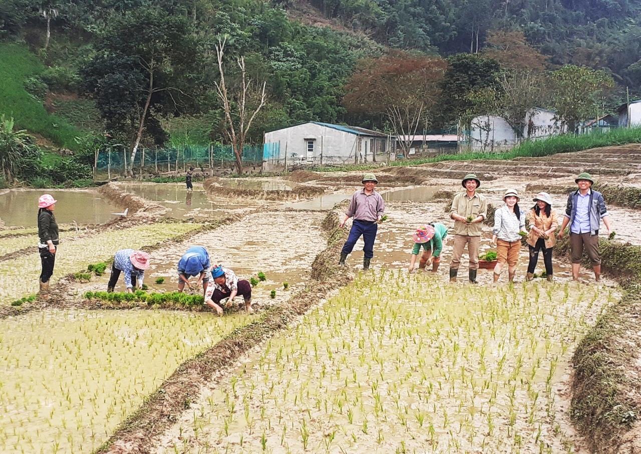 Cán bộ Tổng đội TNXP Tam Hợp hướng dẫn bà con trồng lúa nước