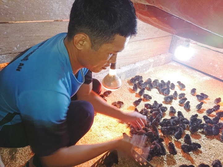 Đội viên Vừ Giống Hùa (bản Huồi Sơn) đã nắm vững kỹ thuật chăn nuôi gà