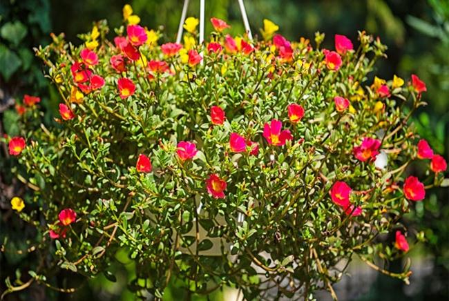 Giò hoa tự trồng khoe sắc tạo không khí, tâm lý tích cực trong những ngày cách ly