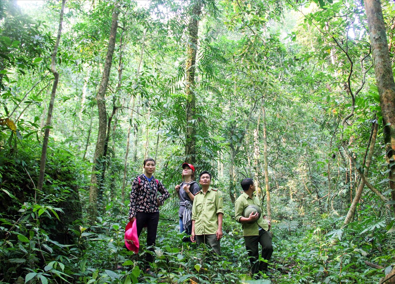 Tuần tra bảo vệ rừng Pù Hoạt, xã Hạnh Dịch, huyện Quế Phong