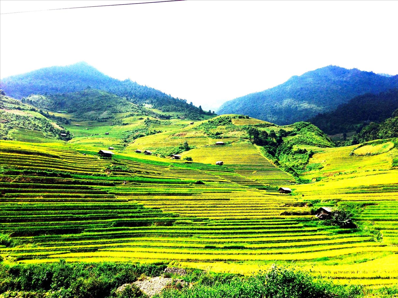 Những sóng lúa vàng óng ả trên những triền ruộng bậc thang Mù Cang Chải