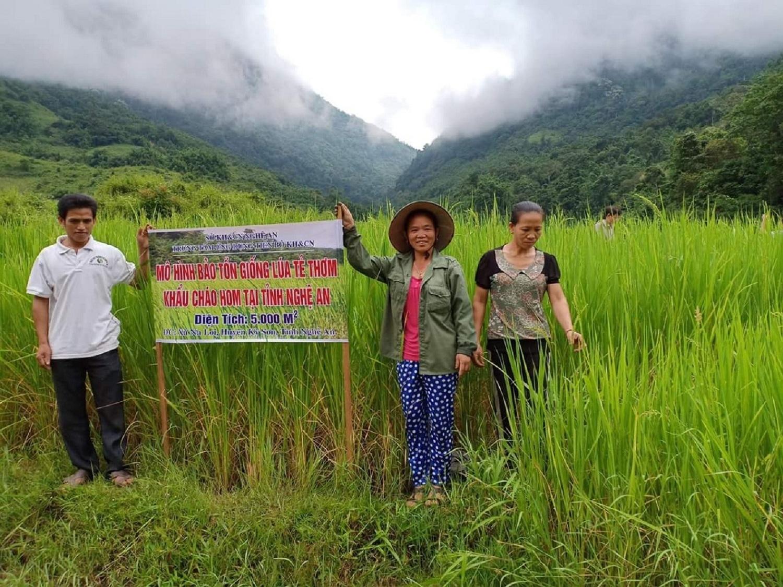 Mô hình trồng lúa Tẻ thơm đặc sản ở xã Na Loi (huyện Kỳ Sơn) trên diện tích ruộng lúa nước mới được khai hoang
