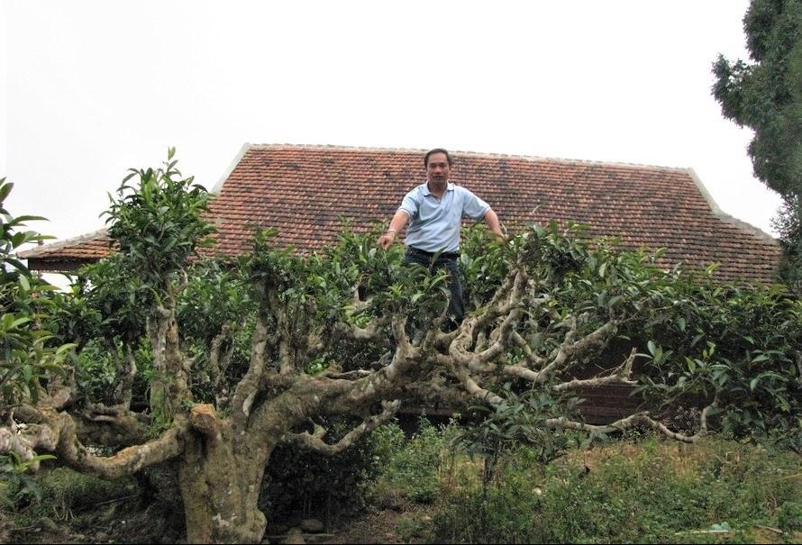 Anh Phạm Vũ Khánh, người sáng lập thương hiệu trà Shanam