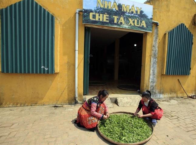 Những công nhân người Mông làm việc trong nhà máy chè Shanam ở Tà Xùa