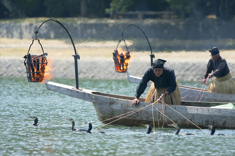 Ngư dân vùng sông Nagara (Nhật Bản) dùng chim cốc để đánh bắt cá