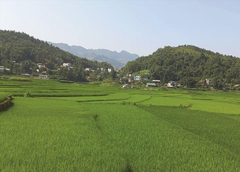 Một góc xã Bản Mế, Si Ma Cai, Lào Cai với màu xanh ngát của đồng ruộng và những khu rừng già