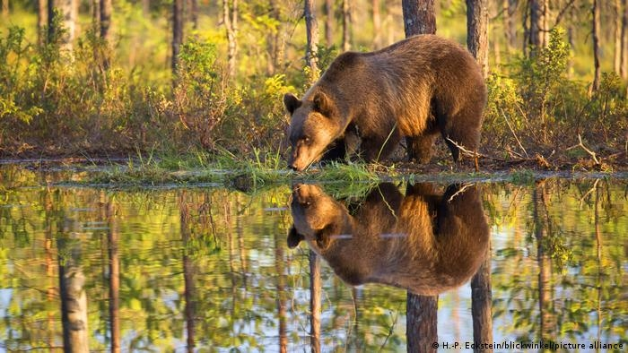 Công viên nằm ở vùng đông bắc Phần Lan, nổi tiếng với các khu rừng rậm cùng với rất nhiều hồ nước trong như pha lê, rất lý tưởng đối với những du khách có sở thích đi bộ đường dài. Nếu may mắn, du khách có cơ hội bắt gặp nhiều loại động vật hoang dã, như loài gấu nâu.