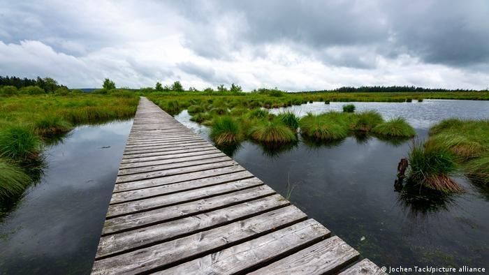 Khu bảo tồn chạy dọc biên giới Bỉ-Đức được mệnh danh là một trong những địa điểm tập trung nhiều sinh vật quý hiếm của châu Âu. Đón lượng mưa nhiều cùng với độ ẩm cao, High Fens là khu bảo tồn có hệ sinh thái rất đặc trưng