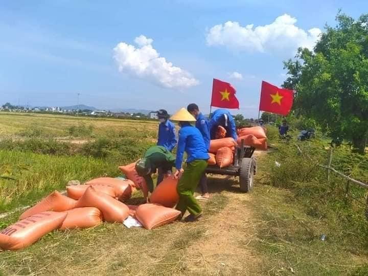 Đội tình nguyện thu hoạch lúa giúp dân tại xã Bắc Thành, huyện Yên Thành, tỉnh Nghệ An