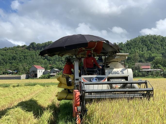 Tỉnh Quảng Bình đang huy động tối đa náy gặt đa năng để đẩy nhanh tiến độ thu hoạch lúa Hè Thu