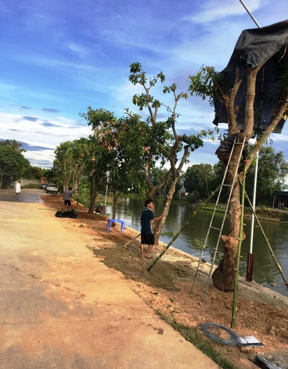 Một hàng cây đẹp đã được trồng xuống càng tô đẹp thêm làng quê ven sông