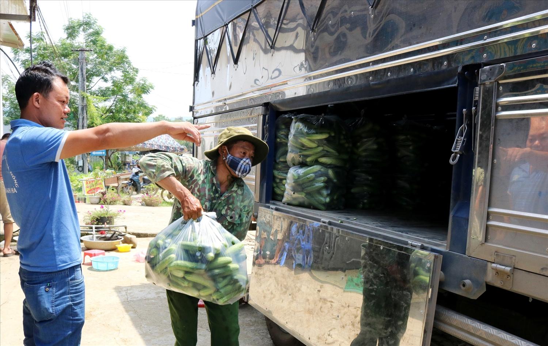Công ty TNHH Dưa Leo Quê Vùng Miền thu mua dưa leo của người dân xã Quyết Tiến chuyển về dưới xuôi