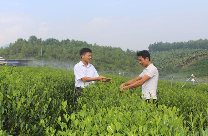 Anh Nguyễn Huy Sơn (ngoài cùng bên trái) hướng dẫn người dẫn kỹ thuật thu hái chè
