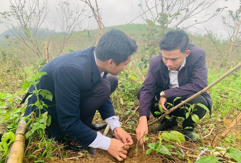 Anh Hiển (bên phải) cùng cán bộ nông nghiệp huyện Tây Giang trao đổi về loại sâm ba kích