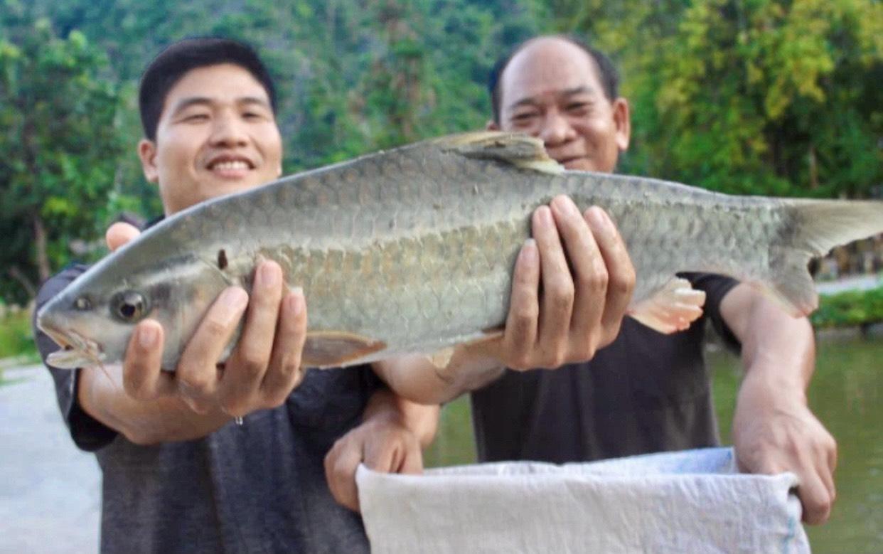 Cá bỗng là đặc sản đang được chuyển sang nuôi theo hướng hàng hóa, hướng đến sản phẩm OCOP của địa phương