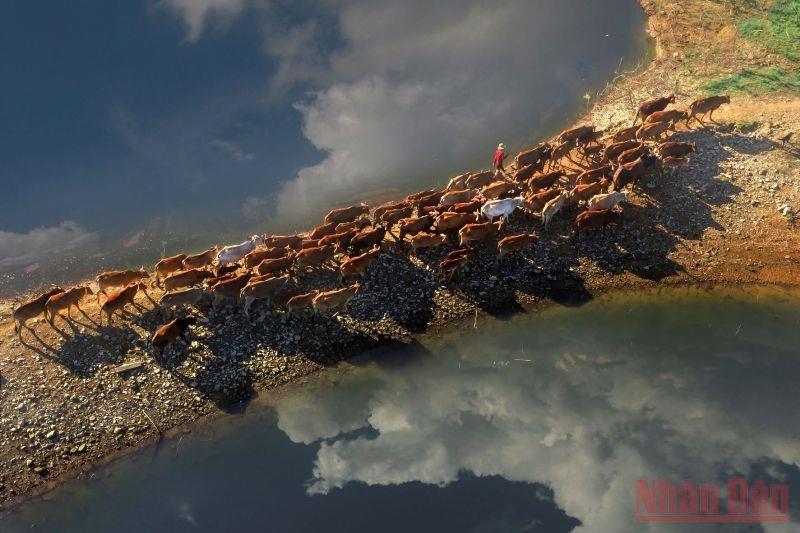 Bến Nôm đẹp ngỡ ngàng mùa nước cạn 12