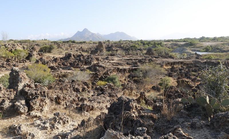 Bãi san hô cổ Karang trên đất liền được phát hiện tại làng Chăm Mỹ Nghiệp, thị trấn Phước Dân và xã Phước Hải