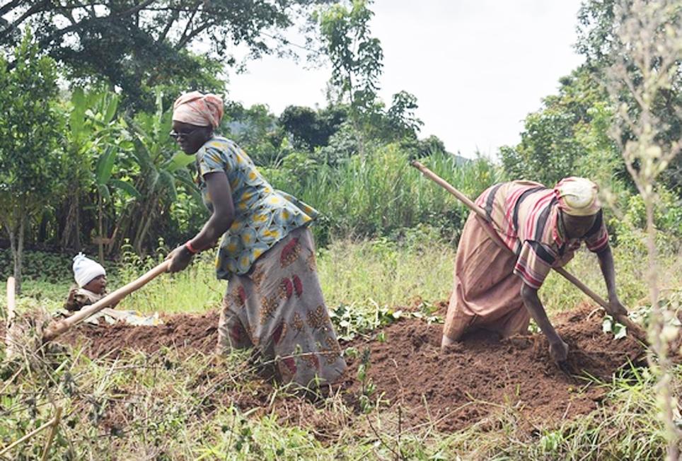 Phụ nữ Burundi chiếm 55,2% trong số 90% lực lượng lao động nông nghiệp