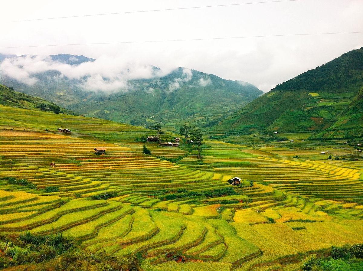 Bức tranh Mù Cang Chải đầu thu với những thửa ruộng bậc thang dần chuyển vàng, xa xa mây trắng bay ngang đỉnh núi