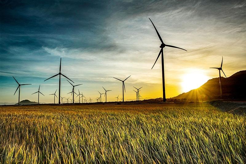 """Nhiều dự án điện gió đang gặp """"khó khăn kép"""" trong tình hình dịch bệnh phức tạp hiện nay"""