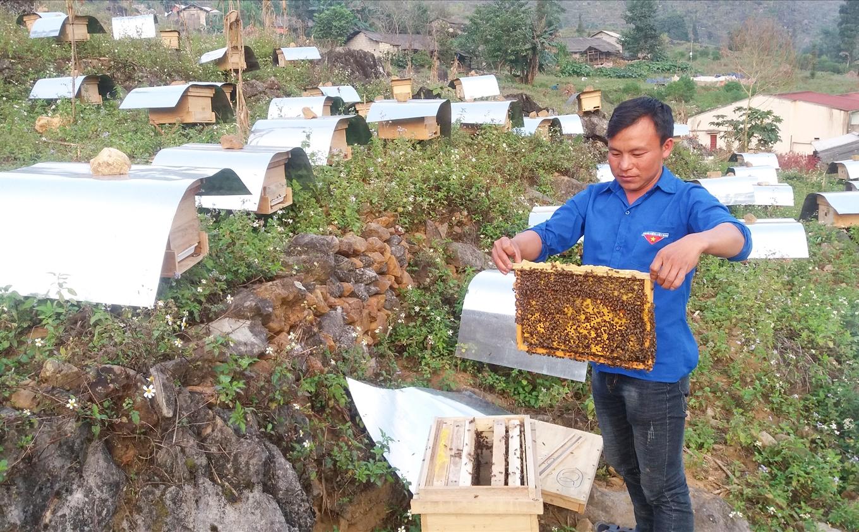 Anh Thò Mí Già đang kiểm tra đàn ong mật của gia đình