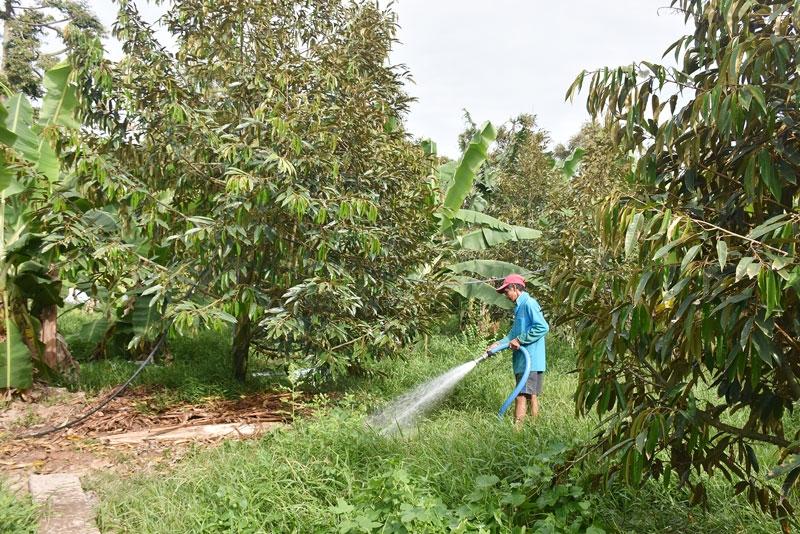 Cần theo dõi thường xuyên tình hình xâm nhập mặn để ứng phó kịp thời, đảm bảo vườn cây phát triển và ổn định thu nhập cho vườn nhà. Ảnh minh họa