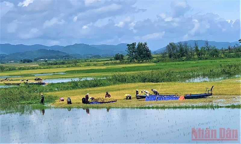 Nhờ vào nguồn nước hồ Lắk, đồng bào M'nông ở đây sản xuất lúa nước hai vụ mỗi năm