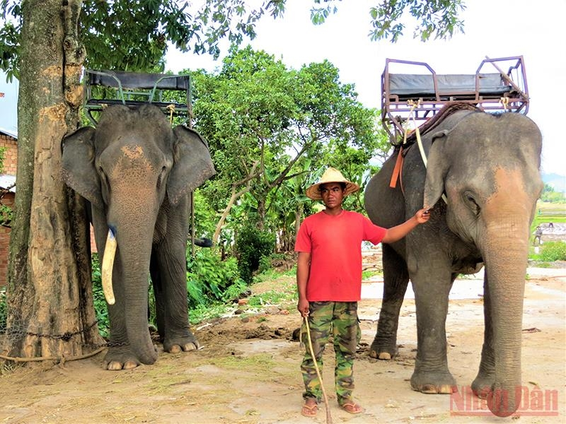 Đến nay, các hộ đồng bào dân tộc sinh sống bên hồ Lắk vẫn còn nuôi dưỡng được 17 con voi, một loại động vật quý hiếm và là một biểu tượng của Tây Nguyên cần được bảo tồn, gìn giữ. Trong thời gian ảnh hưởng dịch Covid-19, đàn voi không phục vụ du lịch mà được đưa về rừng chăn thả để sinh sống trong môi trường tự nhiên